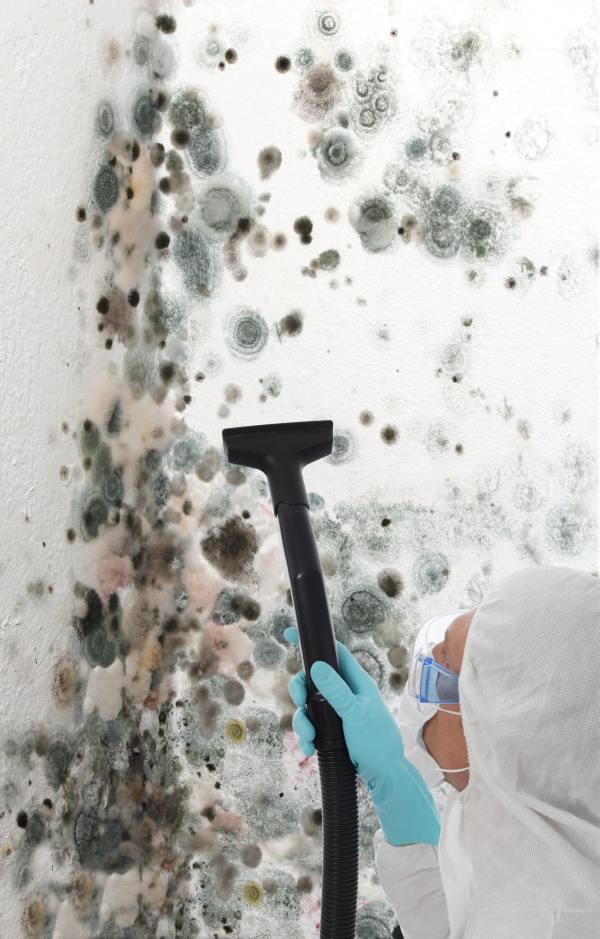 Усунення грибка зі стін